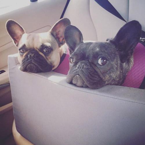 Ora Pets Woof Seat Original